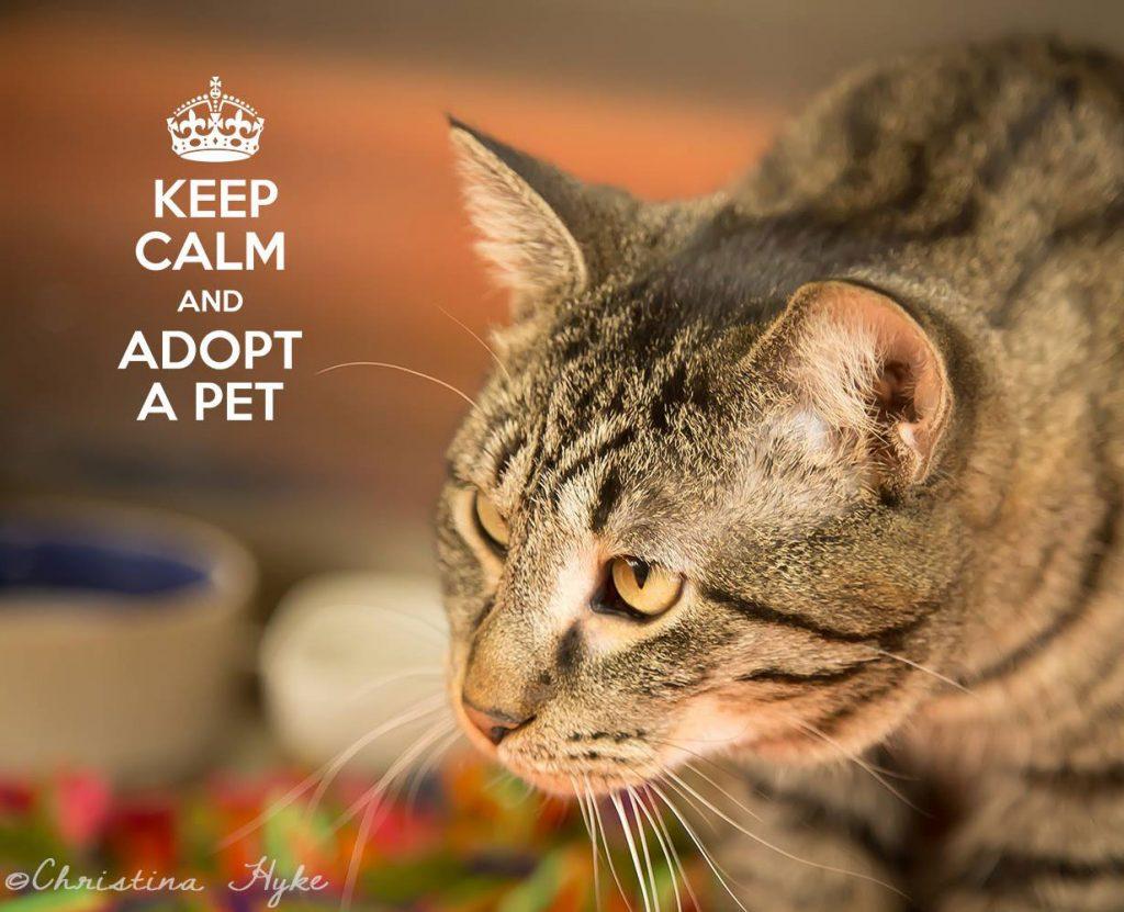 Petsmart Madison Cat Adoption