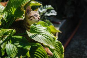 kitten in plant