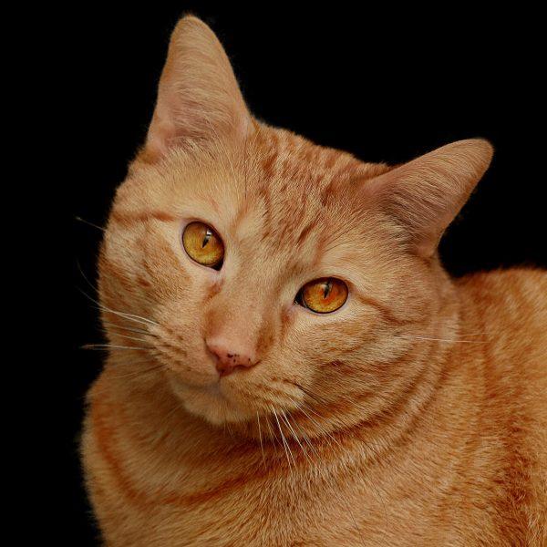 cat-932269