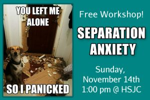 separation-anxiety-feature-nov